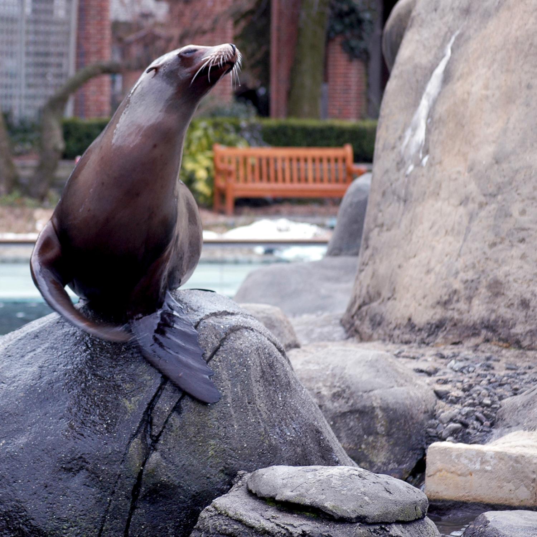Zoo_08