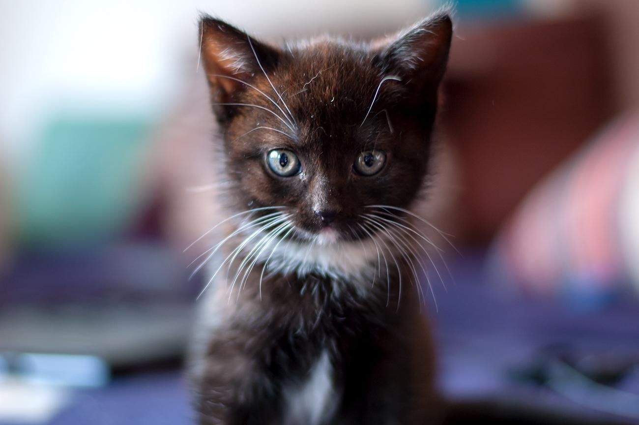 Babycats_03