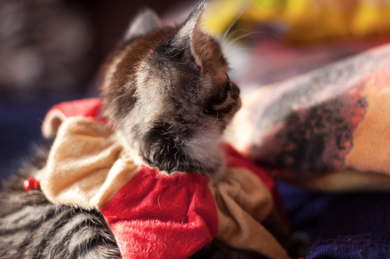 Babycats_05