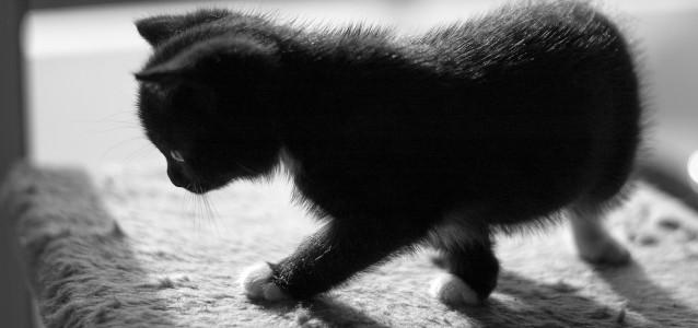 Babycats_07
