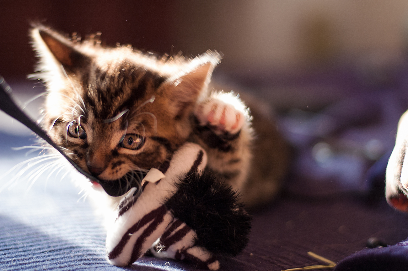Babycats_09
