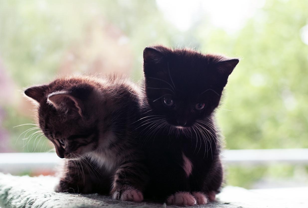 Babycats_12